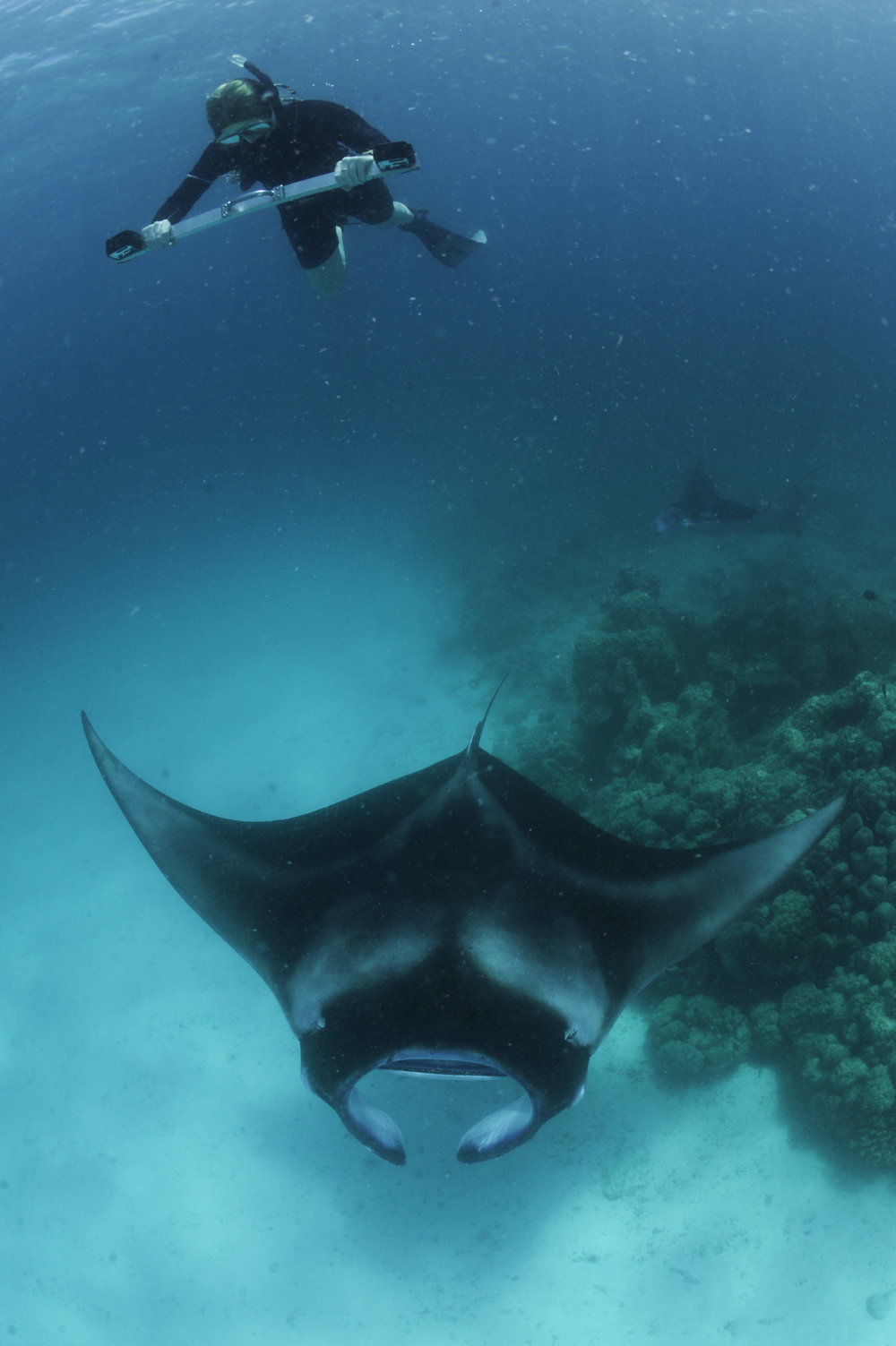 Researcher Using a Stereo-video System to Measure a Reef Manta Ray, Dhandhoo Faru, Baa Atoll, Maldives © Guy Stevens, Manta Trust 2017.jpg