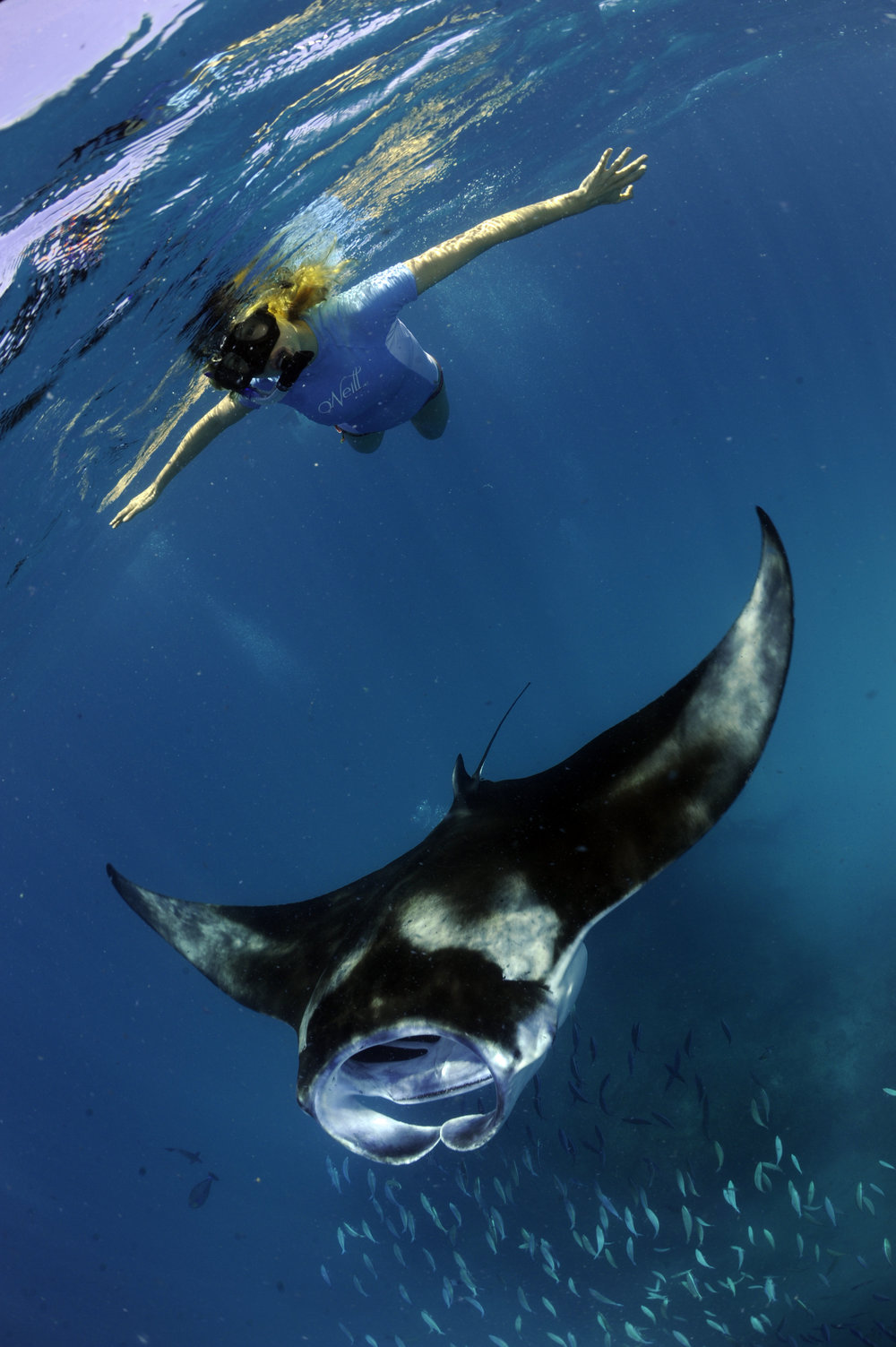 Researchers Attaching Acoustic Listening Station, Sea of Cortez, Mexico, © Guy Stevens, Manta Trust 2011.JPG