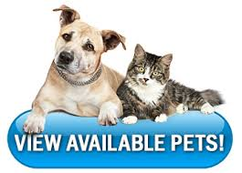 Click image to our Adopt-a-Pet site