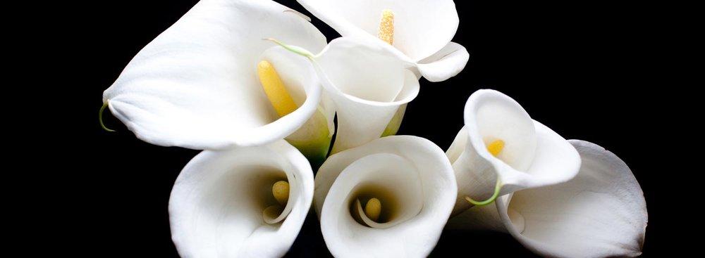 Bienvenue chez Fleuriste Daluka  ARRANGEMENTS FLORAUX POUR TOUTE OCCASION