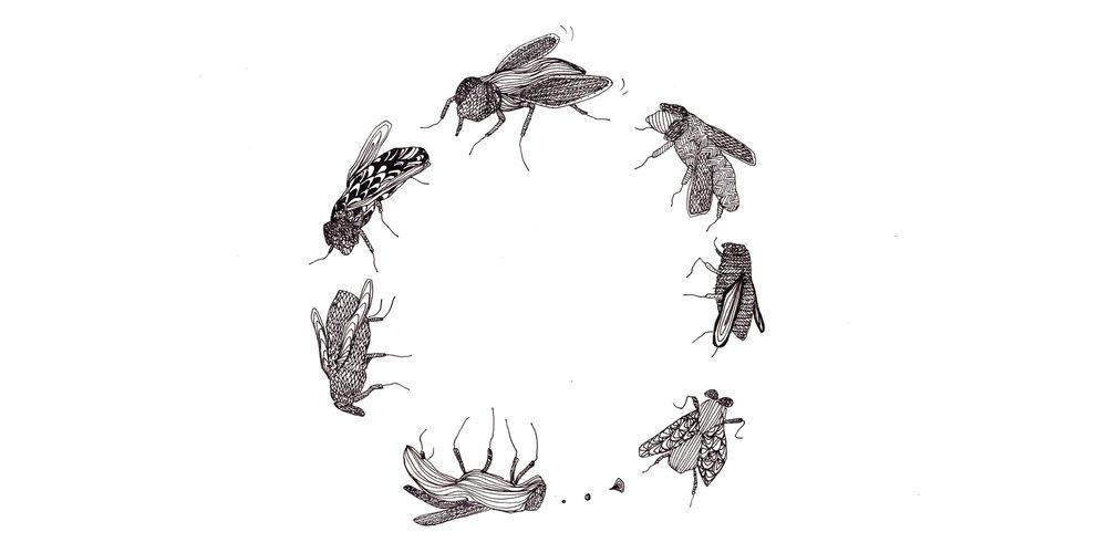 Die Fliegen | © Alexia Fenchel (2017)