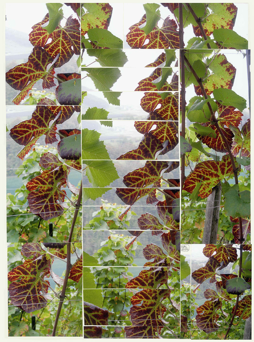 VignesRouge-small.jpg
