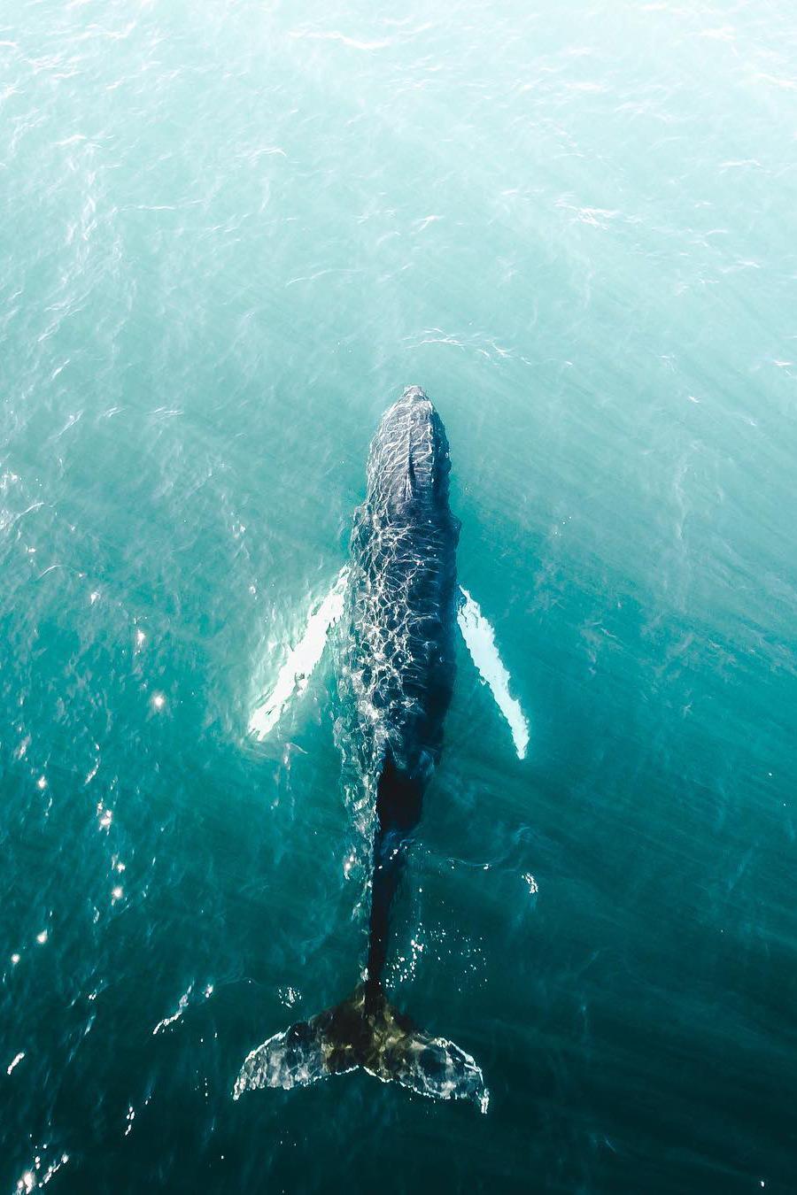 whale@2x.jpg