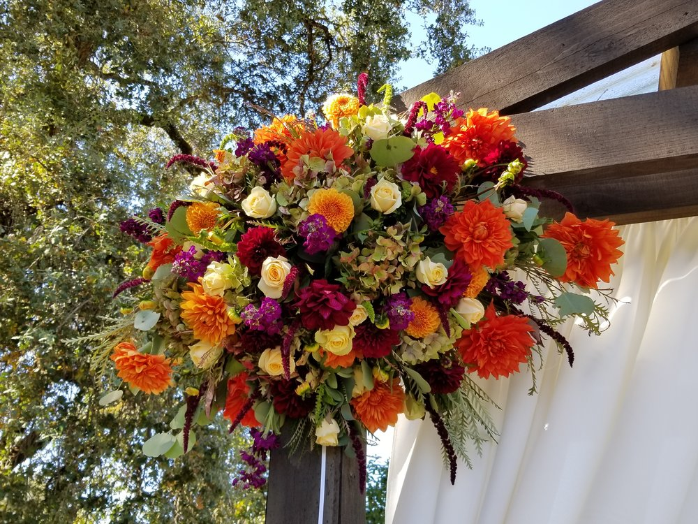 Bright colored flowers including orange, burgundy, blush and purple dahlias, roses, ranunculus. Sonoma County wedding arch flowers