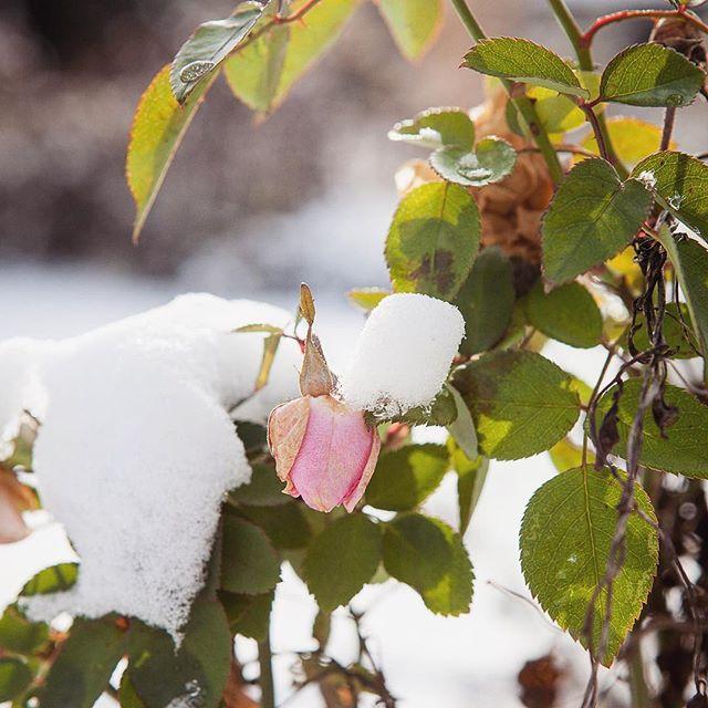 Ein kuscheliges Winterwochenende steht bevor. Feldplanung und Sortenauswahl für den Sommer steht bei mir auf dem Programm. 🙌🤓 #letsdothis  #blumenbund #flowerfarmer #nachhaltigeschnittblumen #slowflowers #regionaleblumen #winterarbeit #planenplanenplanen