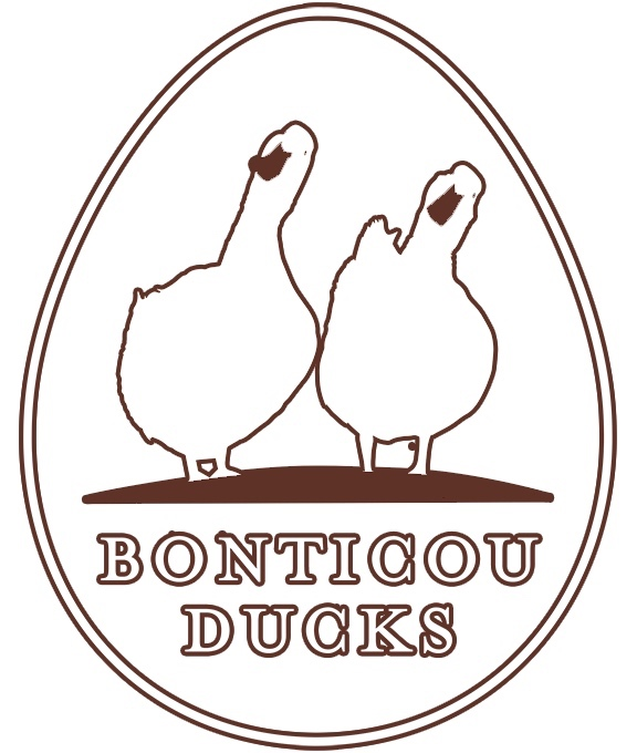 Bonticou Ducks