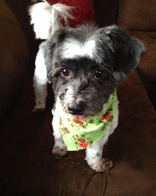 Somebody looks fabulous!! 💗Haircut day 💇🏼🐶#Instachloejoy