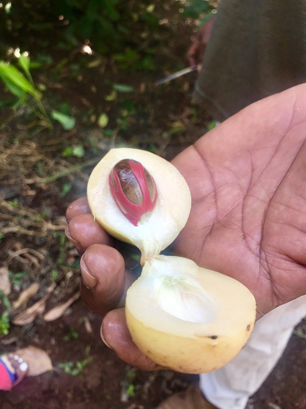 Spice Farm Nutmeg.jpg