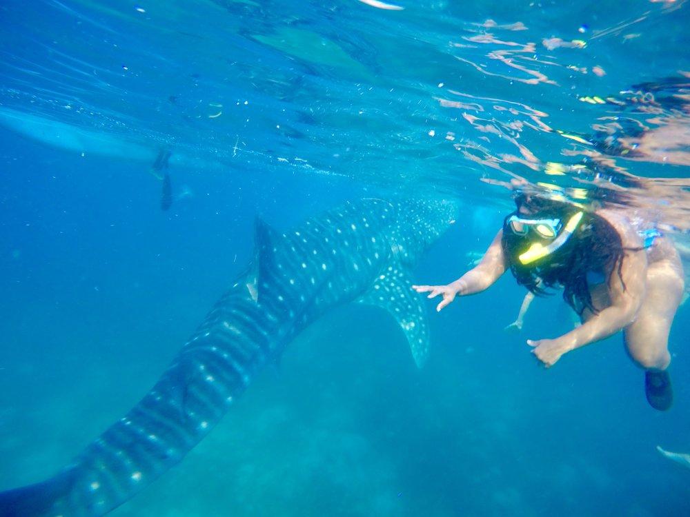 Oslob Whale Shark 3.jpg