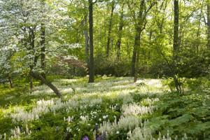 Native-Plant-Garden