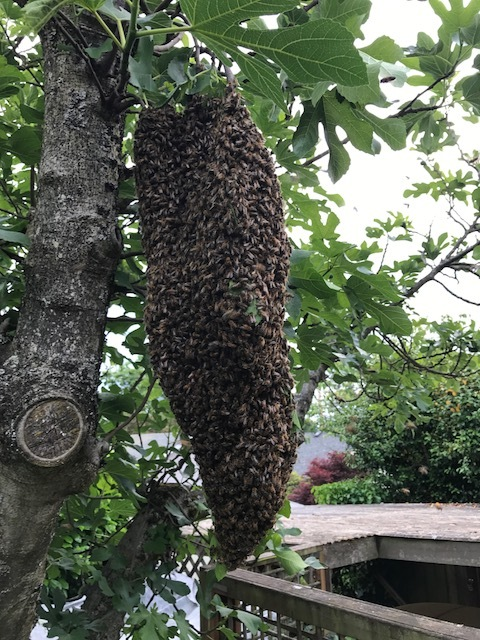 we collect and re-home swarms!