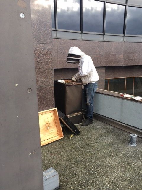 Inspecting the West Hive
