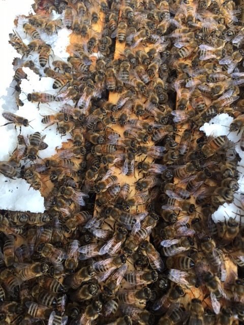Active Bees