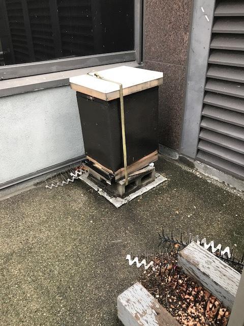 North Hive