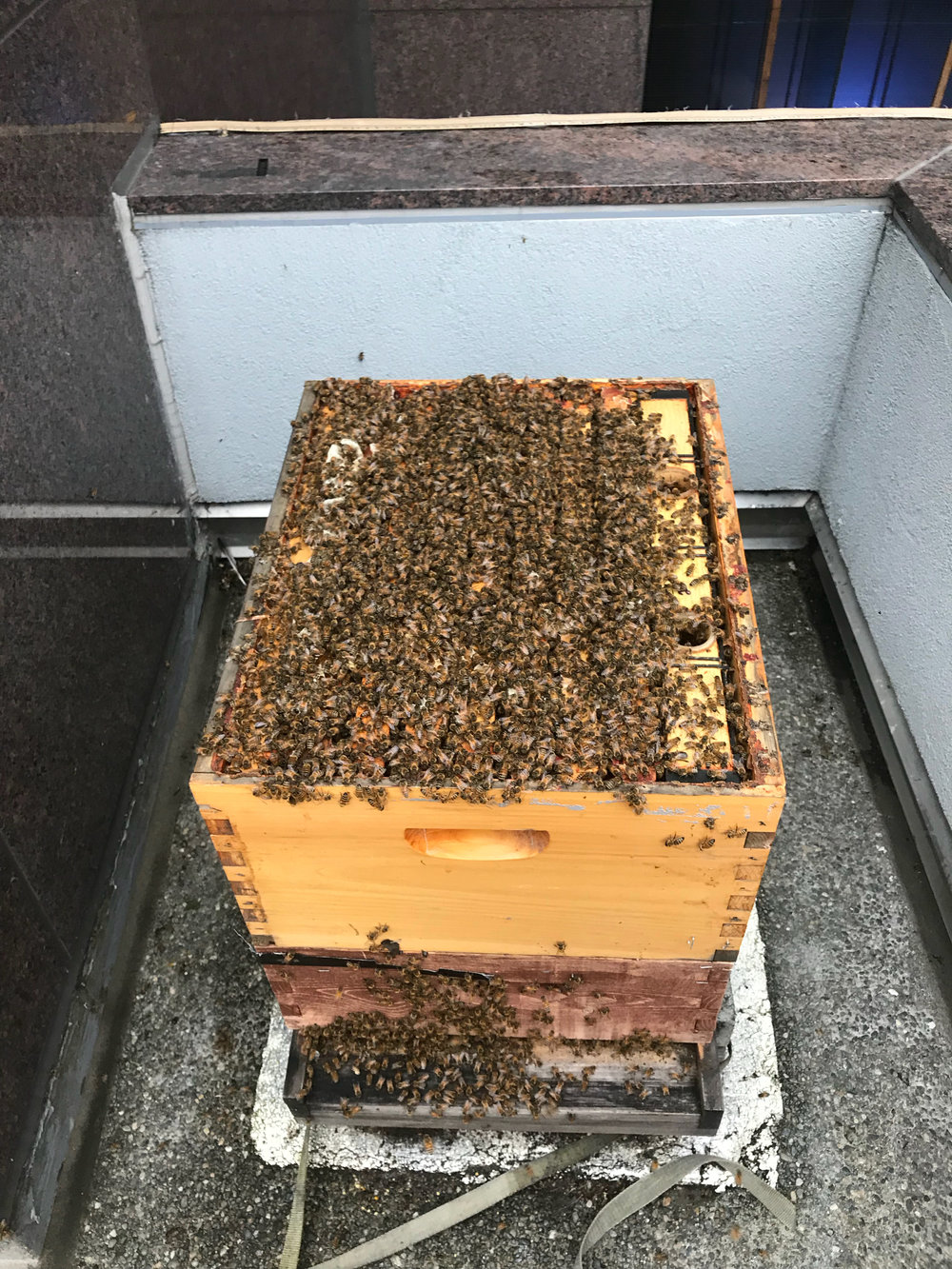 West facing hive with growing population