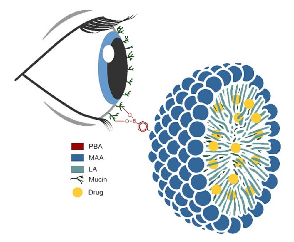 Micelle Schematic.jpg
