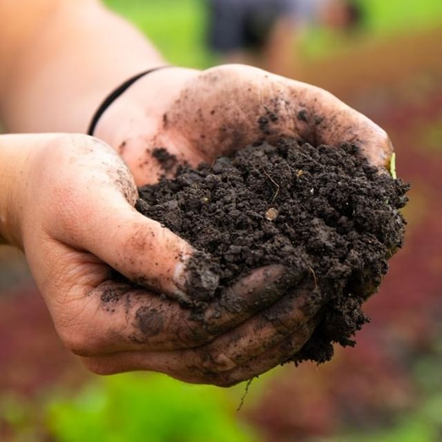 This is the soil from which nations were born from. . Healthy, fertile, and rich in everything needed to sustain a civilization. . Here is one of the pillars of @theearthworker. It's a love letter to those who aren't afraid to get their hands dirty and produce something spectacular. . . . . #EFL #70to200 #canon #teamcanon #7DMarkII @canonusa #garden #agriculture #Earthworker #travel #wanderlust #adventure #filmmaker #adventurefilmmaker #hawaii #project #richsoil #heritage #workinghands #hands #hawaii #aloha #maoorganicfarms @maoorganicfarms #theearthworker @theearthworker
