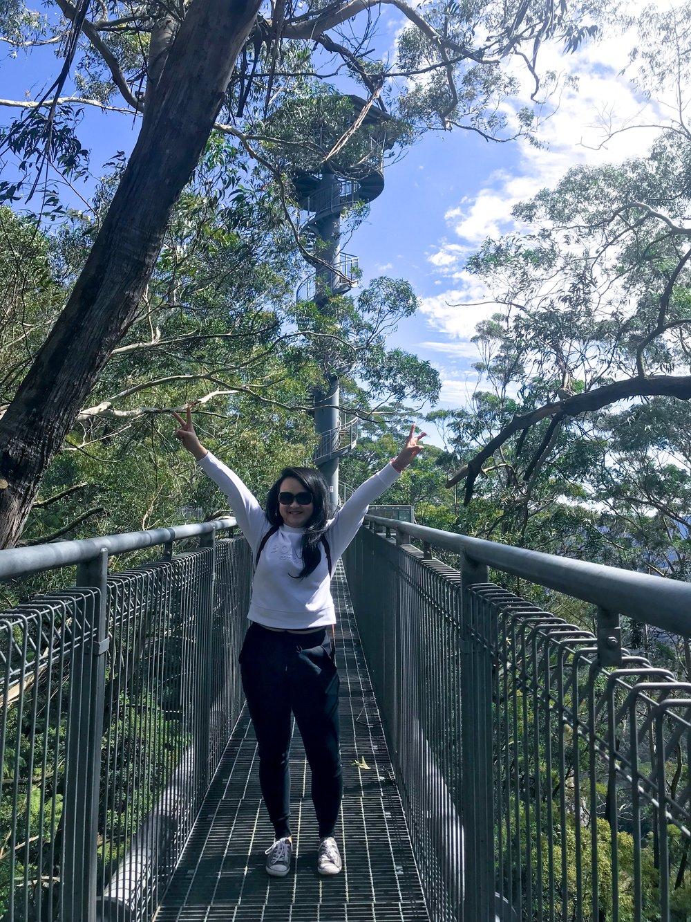 Things To Do in Shellharbour, Illawarra Fly Treetop Walk2.JPG
