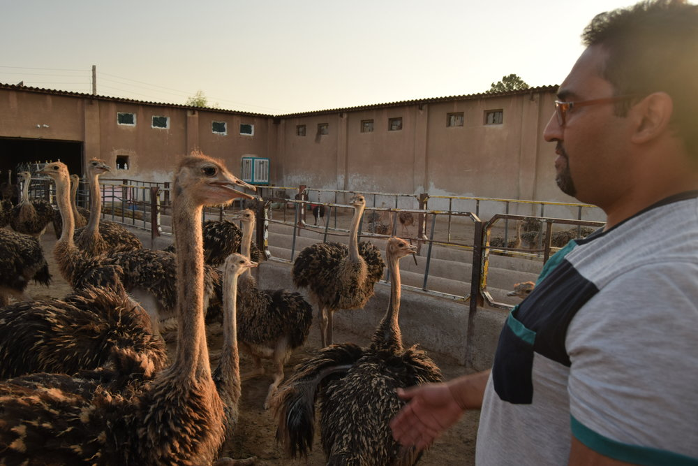This legend hosted me for the night, and showed me his ostrich farm. He was extremely knowledgable about ostriches, and even tried to get me in on his business.