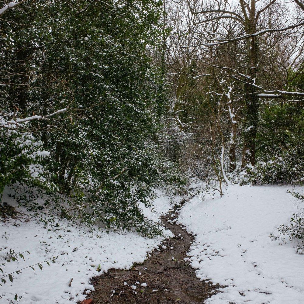 Winter_Neverland-1.jpg