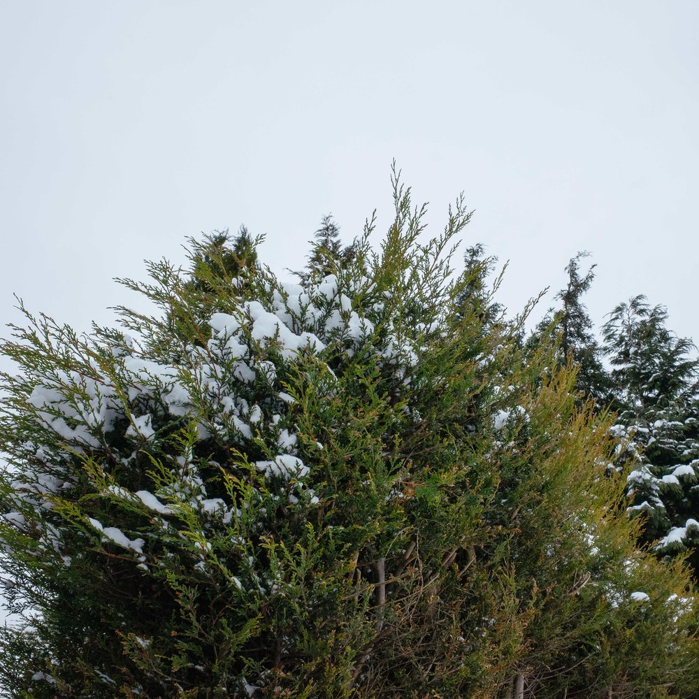 Winter_Neverland-2.jpg