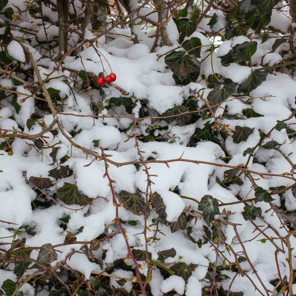 Winter_Neverland-3.jpg
