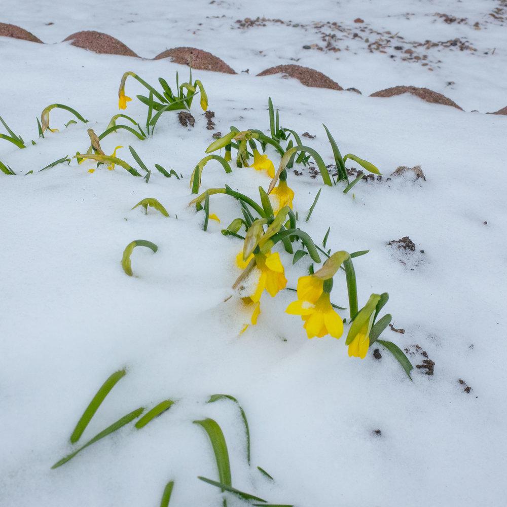 Winter_Neverland-4.jpg