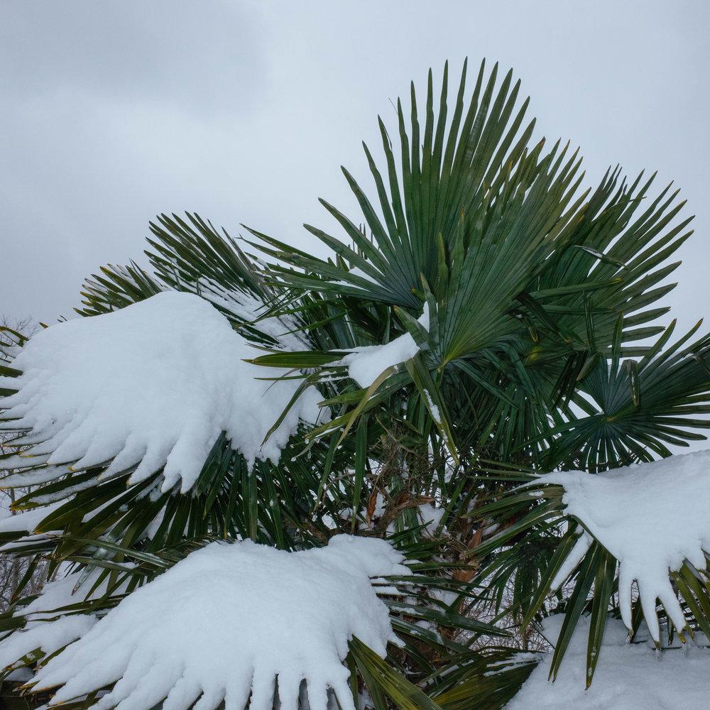 Winter_Neverland-10.jpg