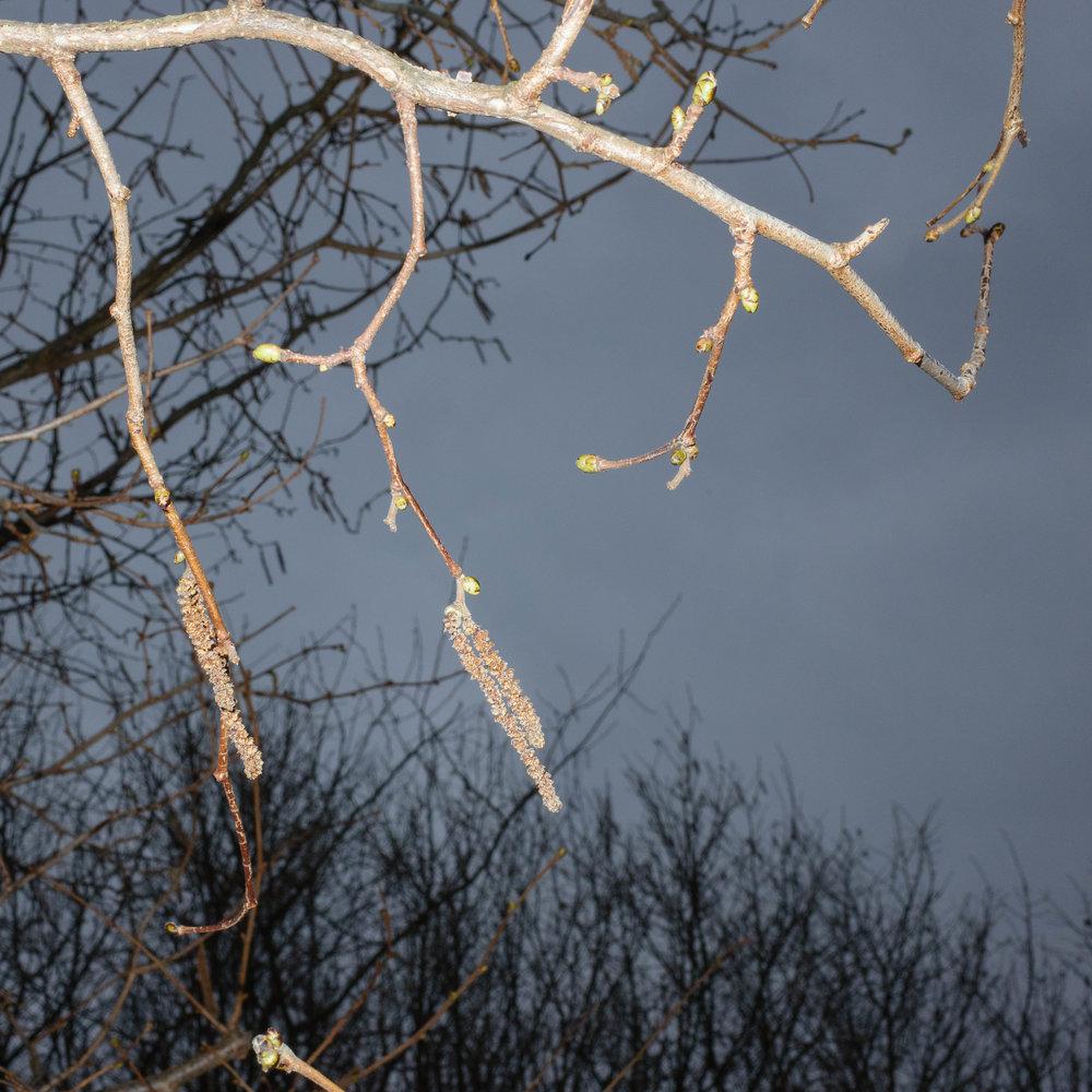 Winter_Neverland-15.jpg