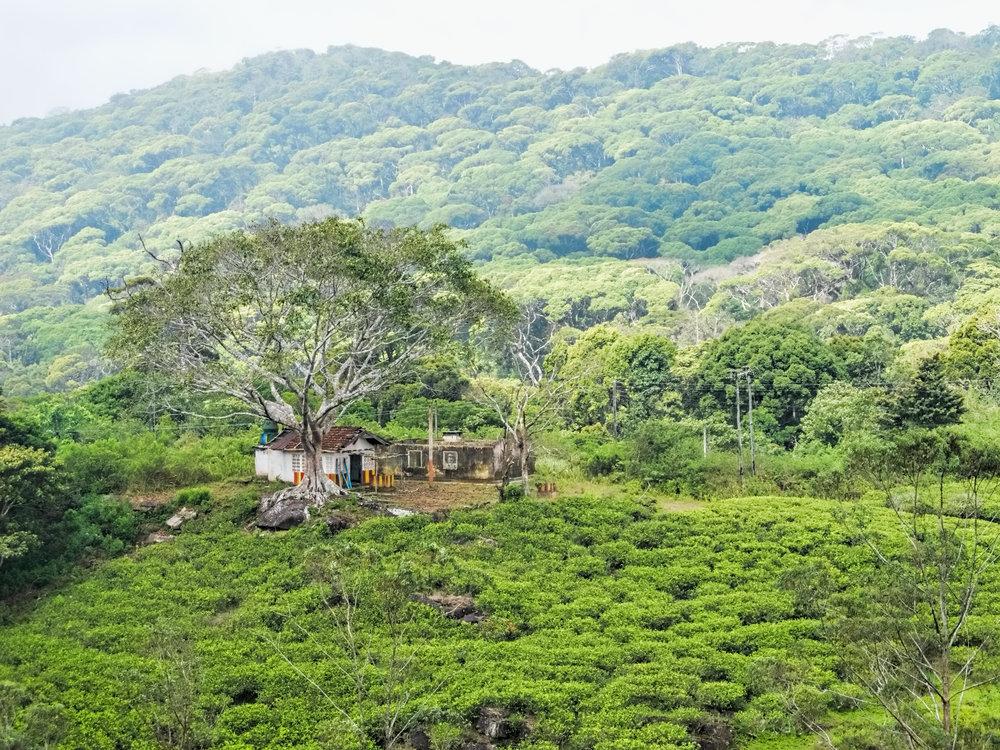 sinaharaja forest land rover tour.jpg