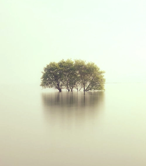 A Nap képe: Ha derékig betakar is víz, vagy tüz:még mindig nyúlhatsz az Ég felé