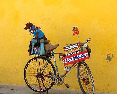Because bikes. . .  #donatedontdump #donatedontdumpbikes #reducereuserecycle #recycle #oneworldbikesfoundation #oneworldbikes #bikelove #cuba #bikes #morebikeslesscars