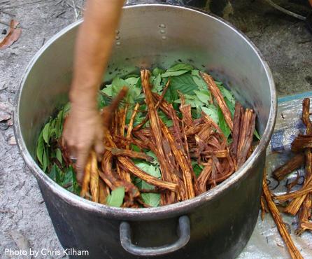 ayahuasca2.jpg