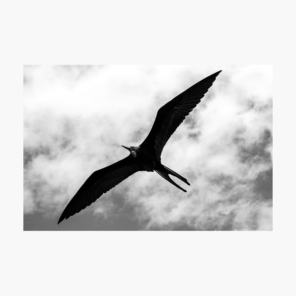 ©-2018-Harry-W-Edmonds-London-Photographers-Note-Galápagos-Islands-PN07.jpg