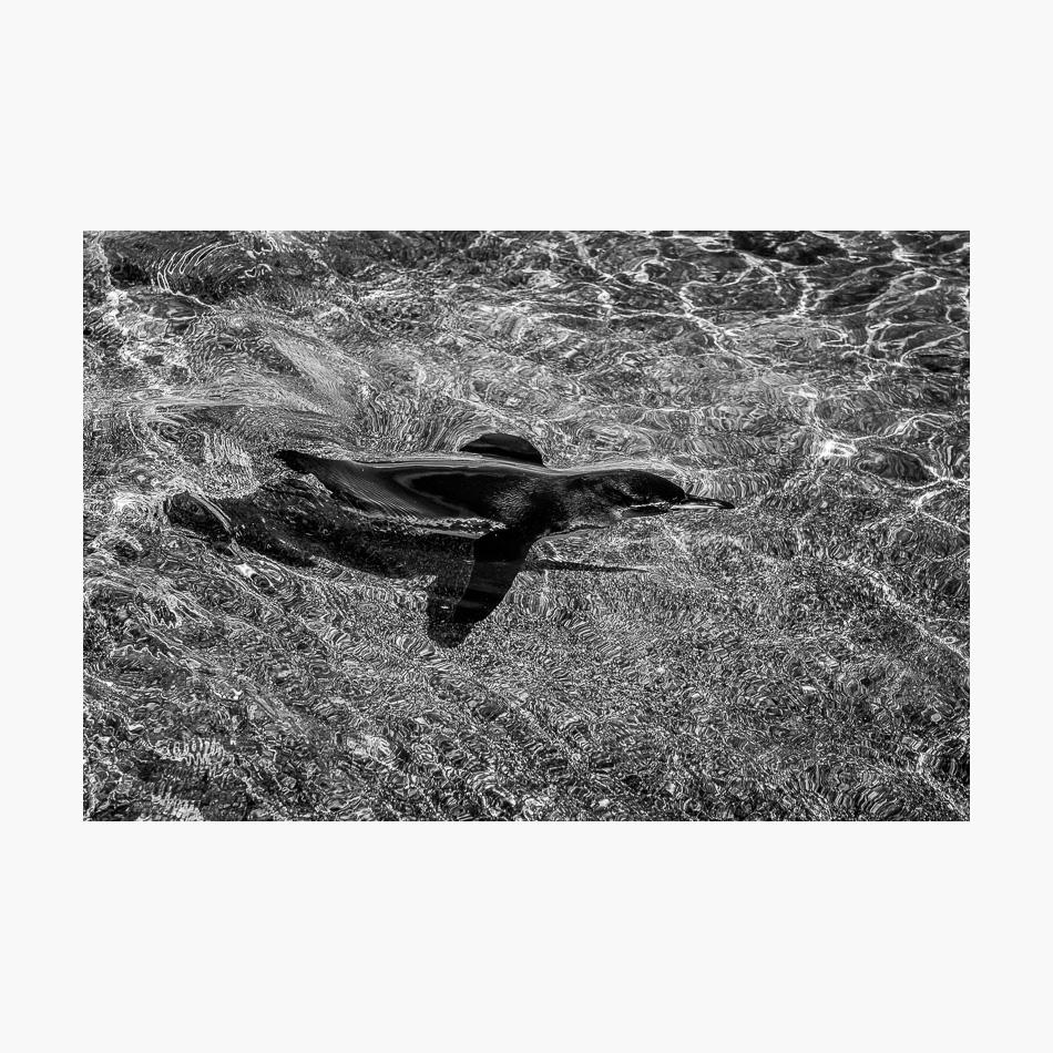 ©-2018-Harry-W-Edmonds-London-Photographers-Note-Galápagos-Islands-PN15.jpg
