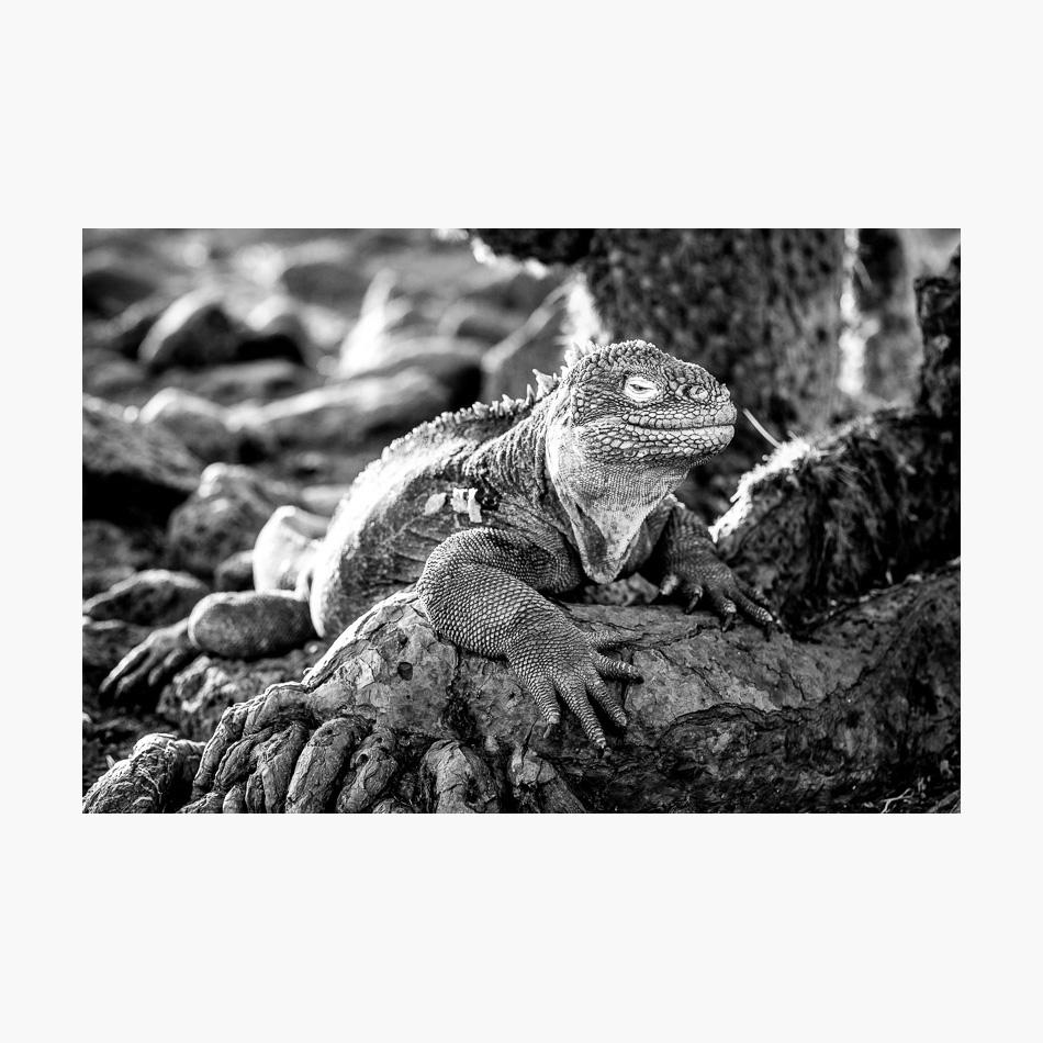 ©-2018-Harry-W-Edmonds-London-Photographers-Note-Galápagos-Islands-PN24.jpg