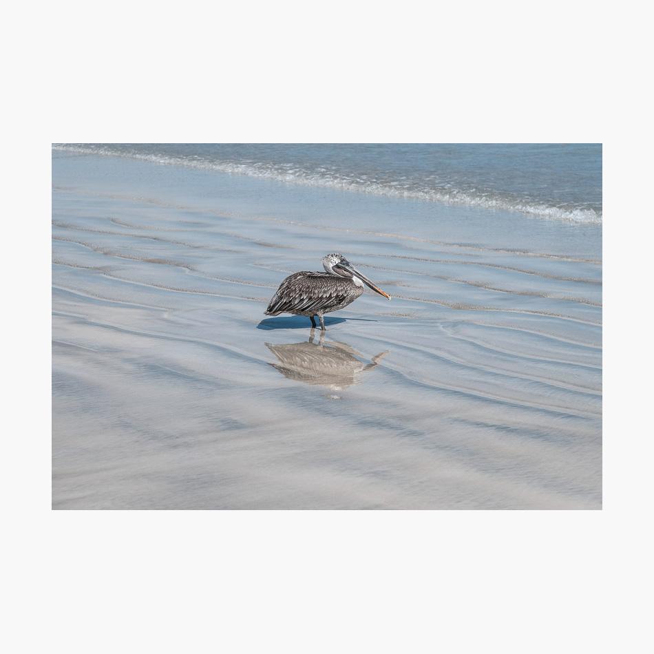 ©-2018-Harry-W-Edmonds-London-Photographers-Note-Galápagos-Islands-PN03.jpg