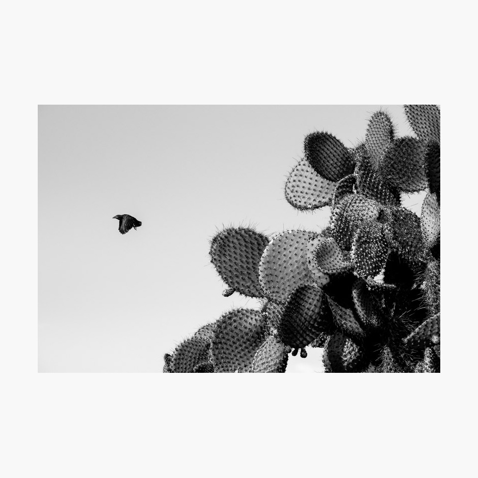 ©-2018-Harry-W-Edmonds-London-Photographers-Note-Galápagos-Islands-PN25.jpg