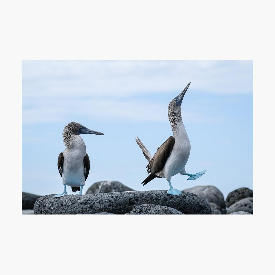 ©-2018-Harry-W-Edmonds-London-Photographers-Note-Galápagos-Islands-PN22.jpg