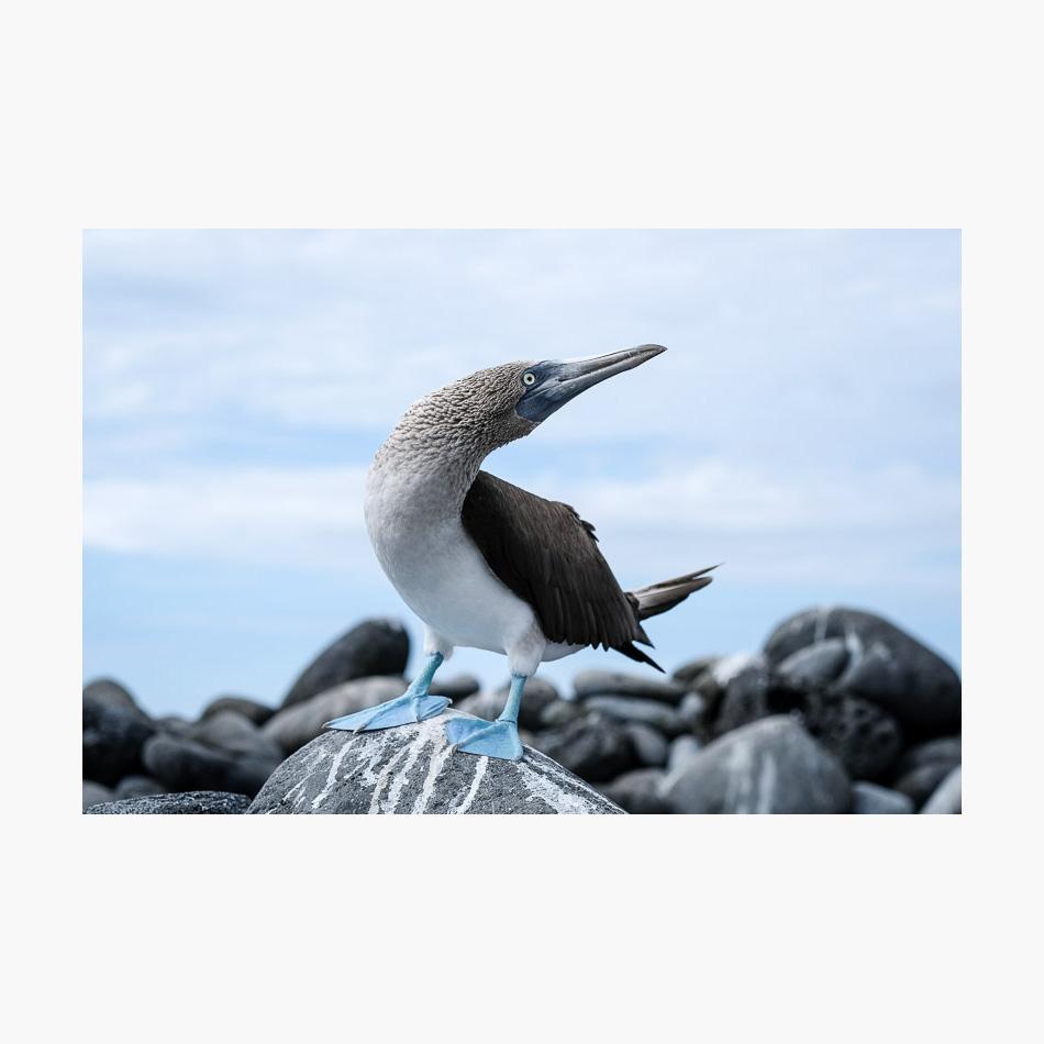 ©-2018-Harry-W-Edmonds-London-Photographers-Note-Galápagos-Islands-PN23.jpg