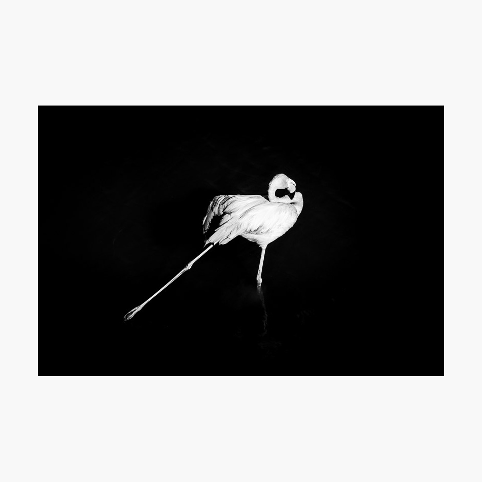 ©-2018-Harry-W-Edmonds-London-Photographers-Note-Galápagos-Islands-PN05.jpg
