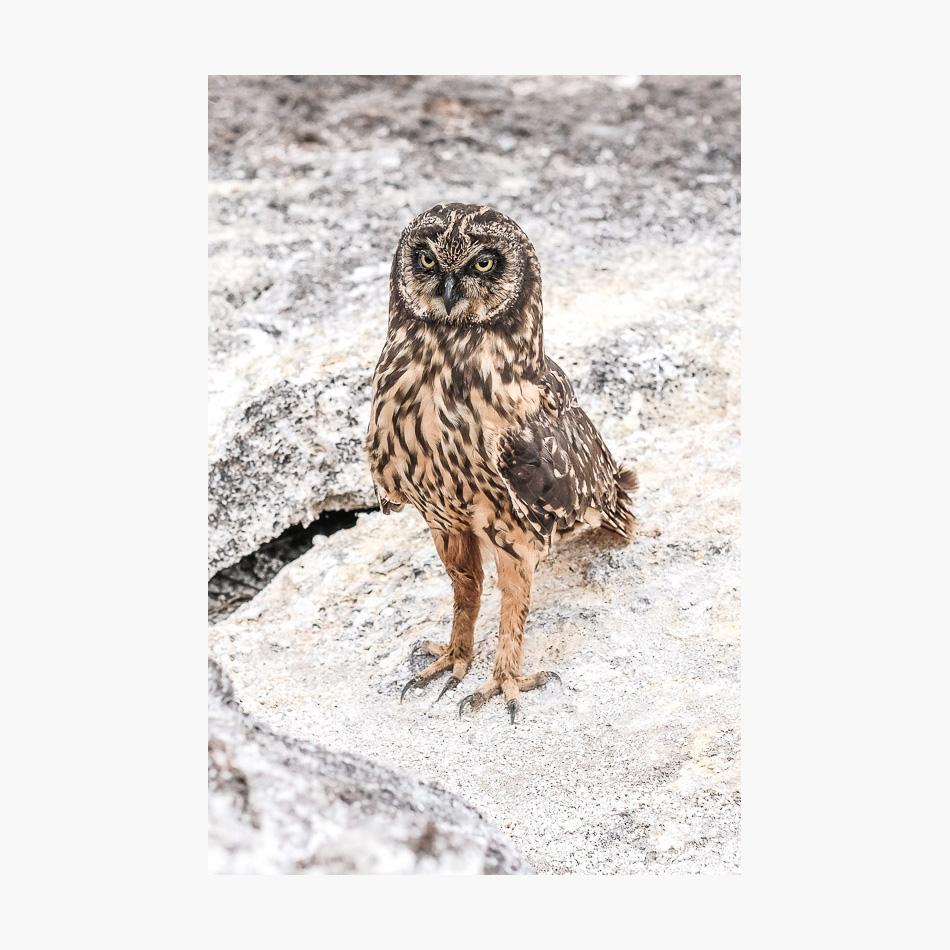 ©-2018-Harry-W-Edmonds-London-Photographers-Note-Galápagos-Islands-PN28.jpg