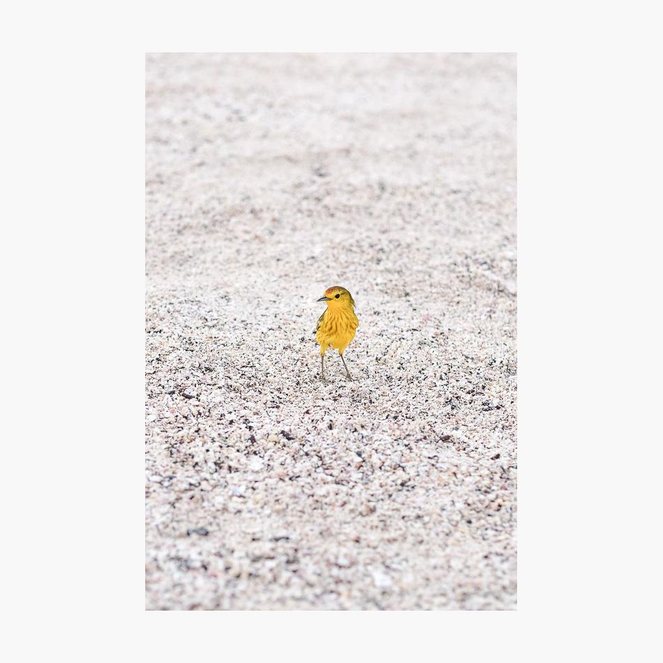 ©-2018-Harry-W-Edmonds-London-Photographers-Note-Galápagos-Islands-PN29.jpg