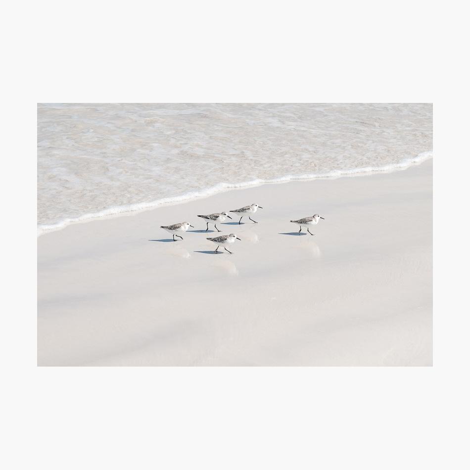 ©-2018-Harry-W-Edmonds-London-Photographers-Note-Galápagos-Islands-PN31.jpg