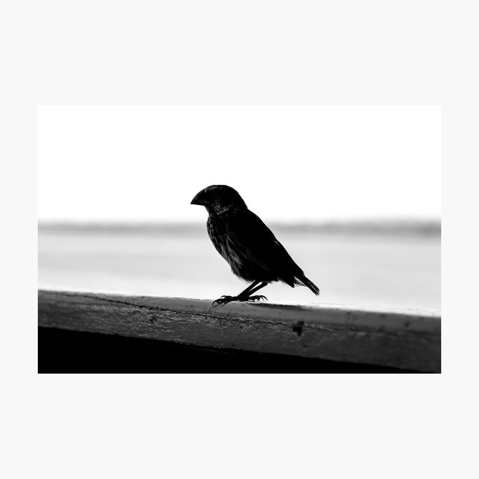 ©-2018-Harry-W-Edmonds-London-Photographers-Note-Galápagos-Islands-PN32.jpg