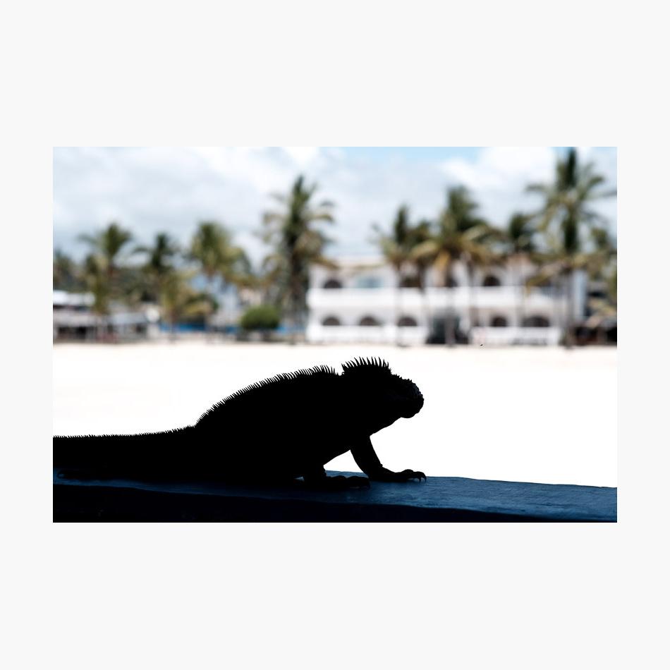 ©-2018-Harry-W-Edmonds-London-Photographers-Note-Galápagos-Islands-PN33.jpg