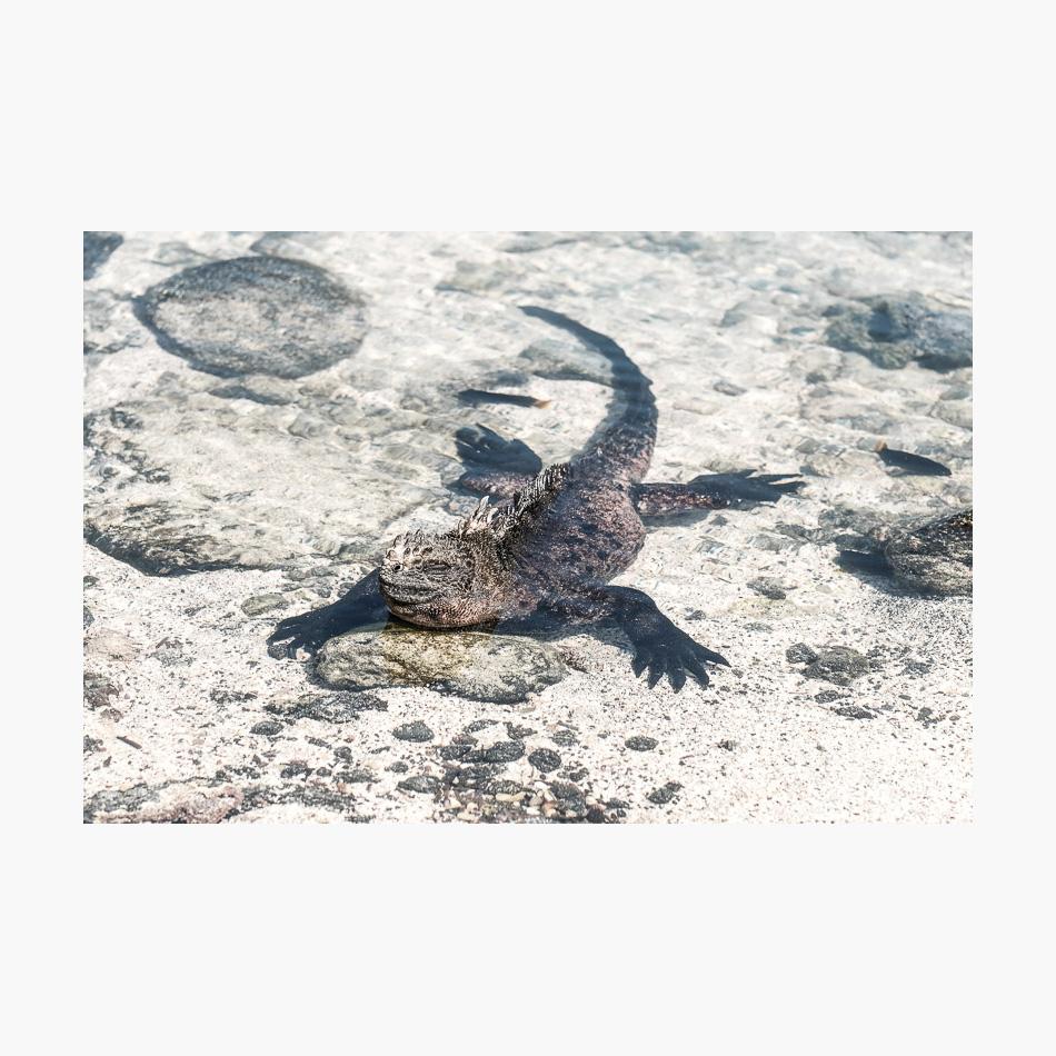 ©-2018-Harry-W-Edmonds-London-Photographers-Note-Galápagos-Islands-PN34.jpg