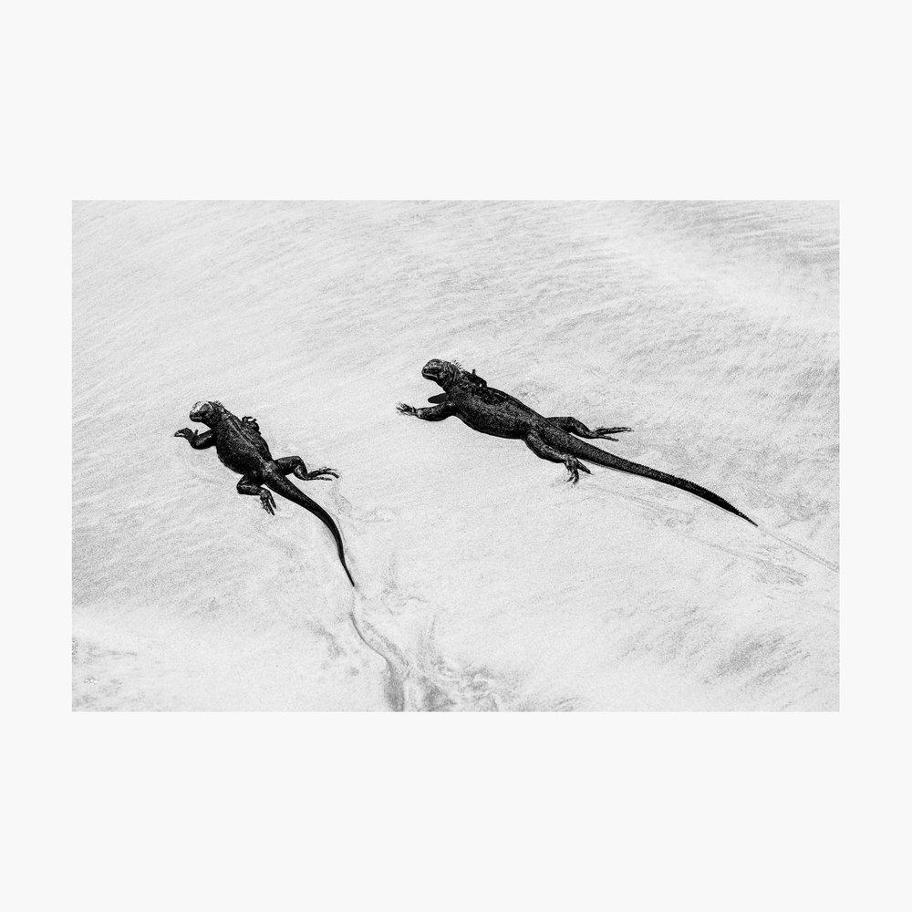 ©-2018-Harry-W-Edmonds-London-Photographer-Polar-Opposites-PN29.jpg