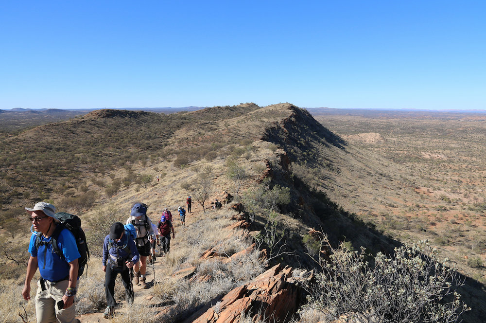 Walking along Euro Ridge on Day 1 of the Larapinta Trail in Comfort with Australian Walking Holidays_Photo Celeste Mitchell.jpg