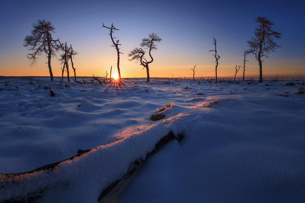 The burned forest (Hautes Fagnes, Belgium)